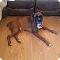 Adopt A Pet :: Diesel - Springfield, MO