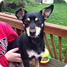 Adopt A Pet :: Runt