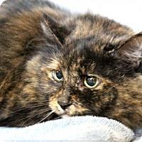 Adopt A Pet :: C-70106 Cinnamon - Westampton, NJ