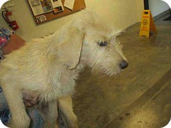 Terrier (Unknown Type, Medium) Mix Dog for adoption in Panama City, Florida - LUMI