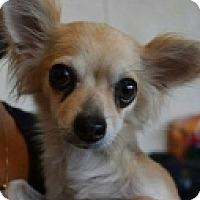 Adopt A Pet :: Fiona - Mesa, AZ