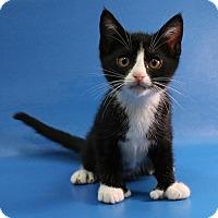 Adopt A Pet :: Allie - Overland Park, KS