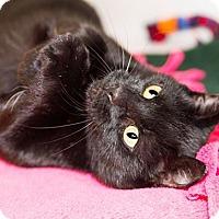 Adopt A Pet :: Joyce - Seville, OH