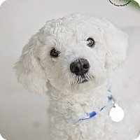 Adopt A Pet :: Mr. Bubbles - Kingwood, TX