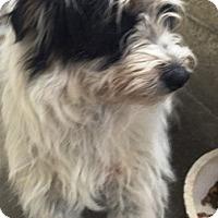Adopt A Pet :: Malibu - Oswego, IL