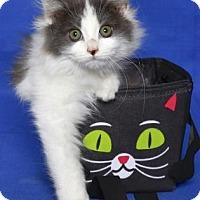 Adopt A Pet :: CASPIAN - Gloucester, VA