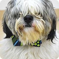 Adopt A Pet :: Matt - Dublin, CA