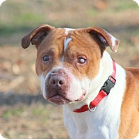 Adopt A Pet :: Theo - Prince Frederick, MD