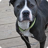 Adopt A Pet :: Gunner - Berea, OH