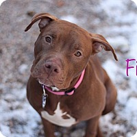 Adopt A Pet :: Fiona - Middlebury, CT
