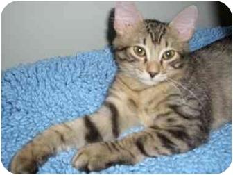 Boca Raton Cat Rescue
