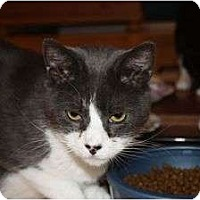 Adopt A Pet :: Diego (LE) - Little Falls, NJ