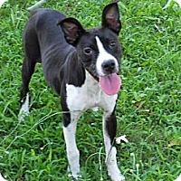 Adopt A Pet :: La-LA- LAYLA - Wakefield, RI
