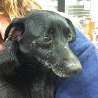 Adopt A Pet :: Bob - Fresno, CA