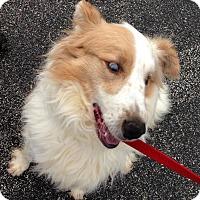 Adopt A Pet :: FIDO! - Owenboro, KY