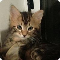 Adopt A Pet :: Maxwell - Edmonton, AB