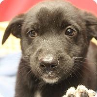 Adopt A Pet :: Ranger - Waldorf, MD