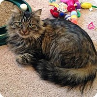 Adopt A Pet :: Tiger Lily - Colorado Springs, CO