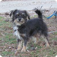 Adopt A Pet :: MARSHALL - Bedminster, NJ