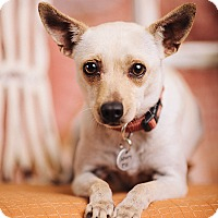Adopt A Pet :: Tessie - Portland, OR