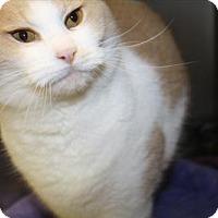 Adopt A Pet :: Sam - Long Beach, WA