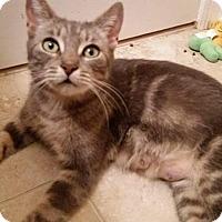 Adopt A Pet :: Skye - East Brunswick, NJ