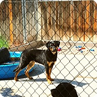 Adopt A Pet :: Curly - LITTLETON, CO