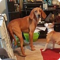Adopt A Pet :: Zelda-31483 - Hanover, PA