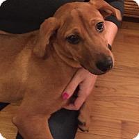 Adopt A Pet :: Autumn - Fenton, MO