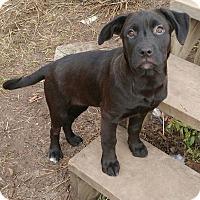 Adopt A Pet :: Leeloo - Duchess, AB