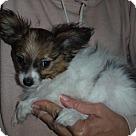 Adopt A Pet :: Petunia
