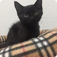 Adopt A Pet :: russ - Bryan, OH