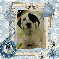 Adopt A Pet :: Pety - Crowley, LA