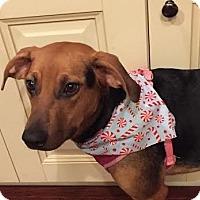 Adopt A Pet :: Mia - Summerville, SC