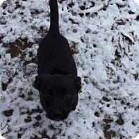 Adopt A Pet :: Angela Bones - Boston, MA