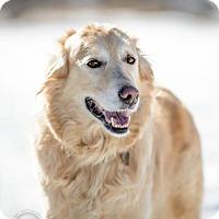 Adopt A Pet :: Denver - Blackstock, ON