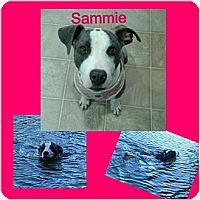 Adopt A Pet :: Sammie - Snellville, GA