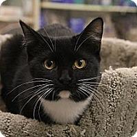 Adopt A Pet :: Cashew - Chesapeake, VA