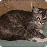 Adopt A Pet :: Jazzy - Brea, CA