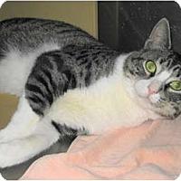 Adopt A Pet :: Mikie - Warminster, PA