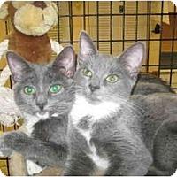 Adopt A Pet :: Blueberry & Dusty - Deerfield Beach, FL