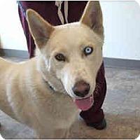 Adopt A Pet :: Jaxon - Scottsdale, AZ