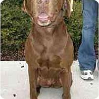 Adopt A Pet :: Bama - Cumming, GA