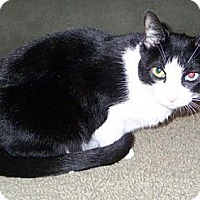 Adopt A Pet :: Precious - Gilbert, AZ