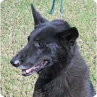 Adopt A Pet :: DEGA - Hendersonville, TN