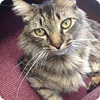 Adopt A Pet :: Bailey - Laguna Woods, CA