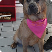 Adopt A Pet :: Dolly - Sacramento, CA