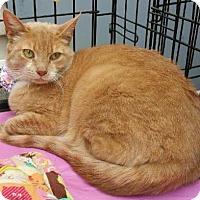 Adopt A Pet :: TUNAS - Ridgewood, NY