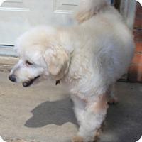 Adopt A Pet :: Bastrop - Norwalk, CT
