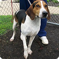 Adopt A Pet :: Buford - Lancaster, OH